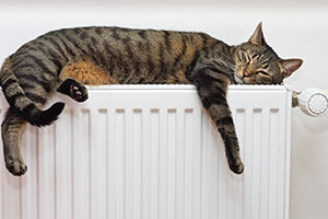 Cat asleep on radiator after finding it's ideal temperature